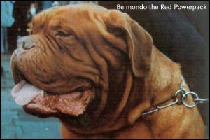 Belmondo the Red Powerpack